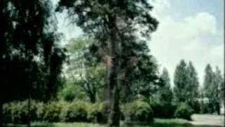 Упражнение большое дерево