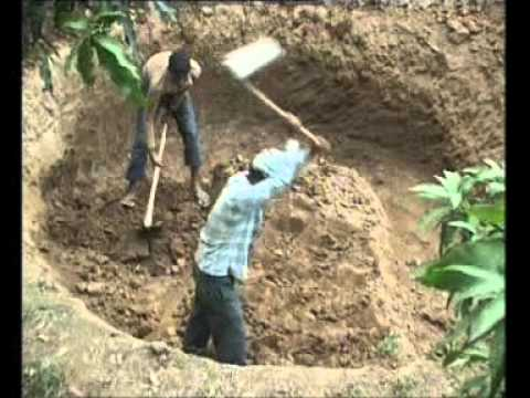 Deen Bandhu Biogas Plant   A Boon for Farmers
