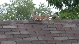 Squirrel jumping onto a feeder from a garage roof. By passing the squirrel proof baffles.  :-)