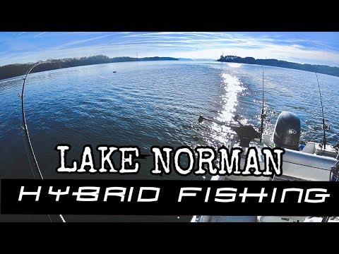 12-26-2019 Lake Norman Winter Hybrids Fishing