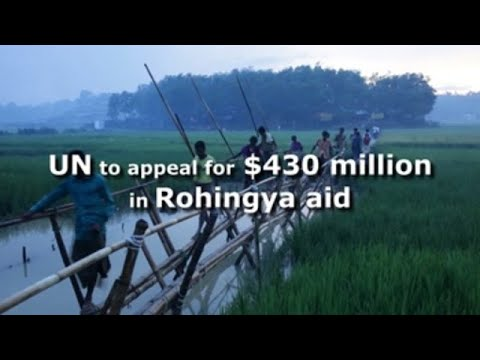 UN to appeal for $430 million in Rohingya aid