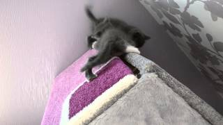 Отомстил(отдам котят в добрые руки 09.05.15 -Барнаул)