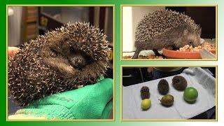 Igel | TierheimTV informiert