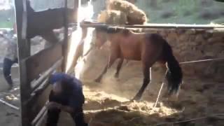 Опасные лошадь