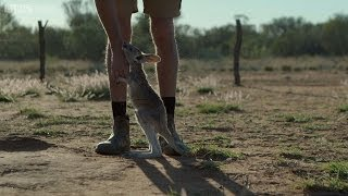 Following the leader - Kangaroo Dundee: Episode 3 Preview - BBC Two