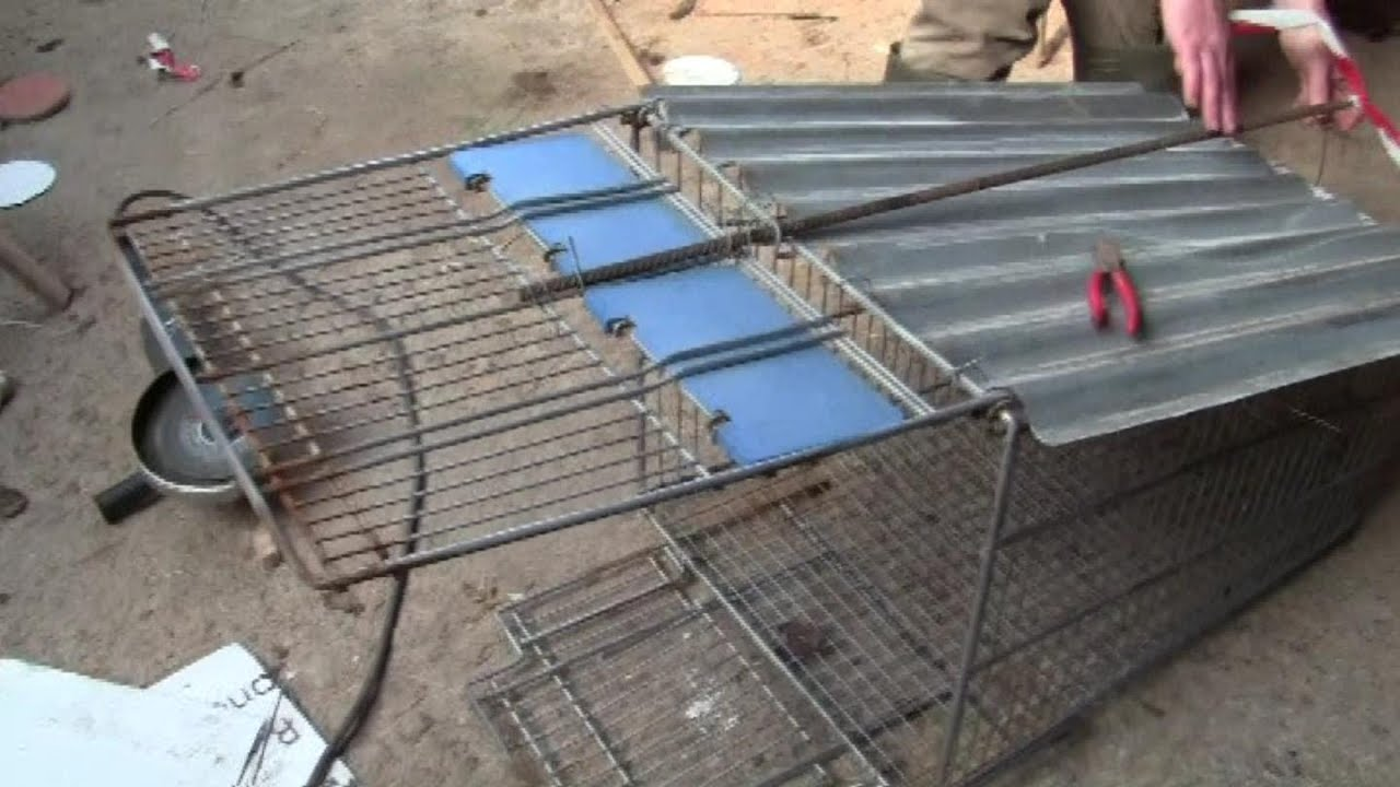 How To Make A Fox Trap From A Shopping Trolley And