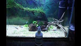 Средство против сине-зеленых водорослей в аквариуме