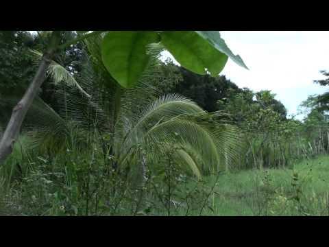solar en venta, santiago, dominican republic