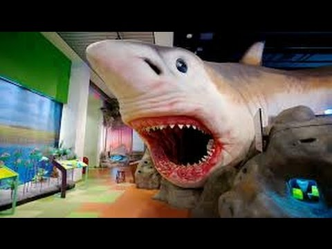 Museum of Discovery and Science in Fort Lauderdale Miami Family Fun Trip Giant Shark