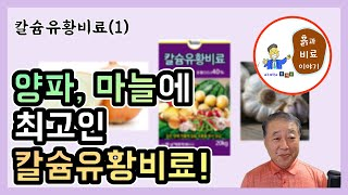 칼슘유황비료(1) - 칼슘유황비료가 양파, 마늘의 품질…