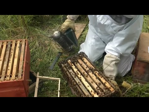 Beekeeping - How to make lots more Bees - Using the Rose Hiv