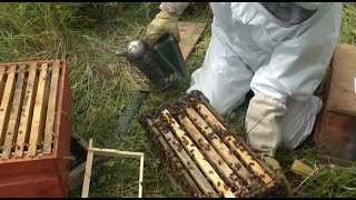 Beekeeping - How to make lots more Bees - Using the Rose Hive Method Part 3(In this Beekeeping for beginners on Artificial Swarm creation. You will get quite a lot of info in an easy to understand manner by Tim, the inventor of the Rose ..., 2013-08-06T15:43:45.000Z)