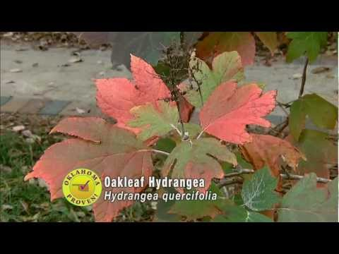 Woody Plants for Fall Color
