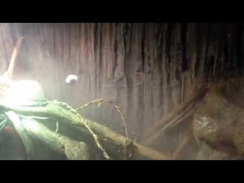Diy Repti Fogger Raise The Humidity In Your Terrarium Youtube