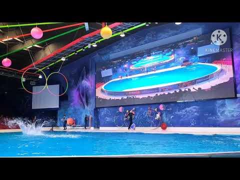 Dubai Dolphinarium, Dolphin & Seal Show