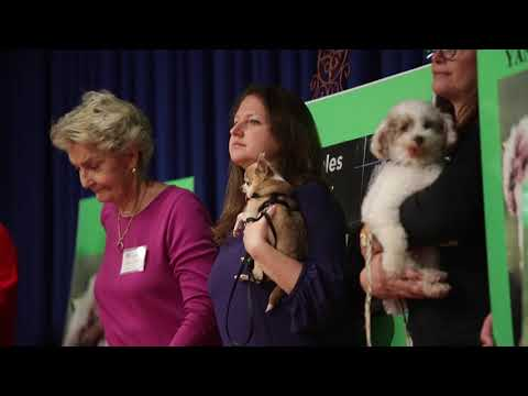 Dogs and advocates lobby at Pennsylvania Capitol for more animal protection s