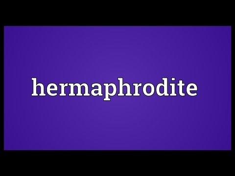 Hermaphrodite Meaning