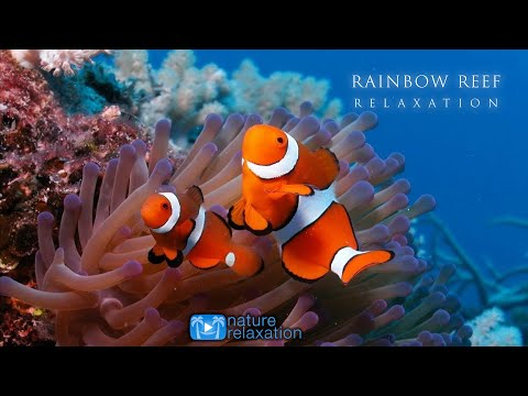 """""""Rainbow Reef"""" 3 HOUR Ambient Underwater Nature Relaxation™ Film + Music (HD 1080)"""