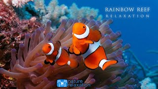 3HRS Stunning Underwater Footage + Relaxing Music | French Polynesia, Indonesia 4K Upscale