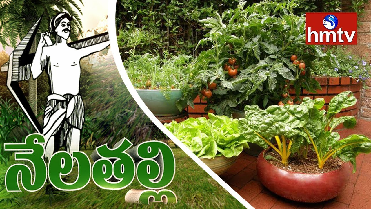 How to Grow Container Ve ables plete Gardening Guide Nela Talli