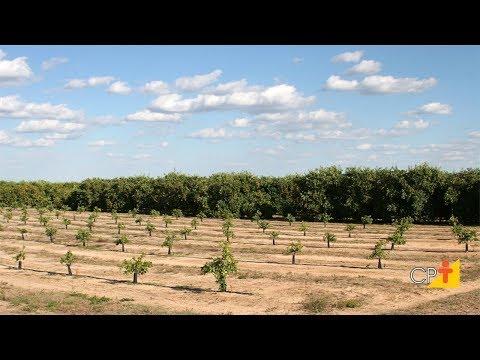 Clique e veja o vídeo Curso Irrigação em Frutíferas