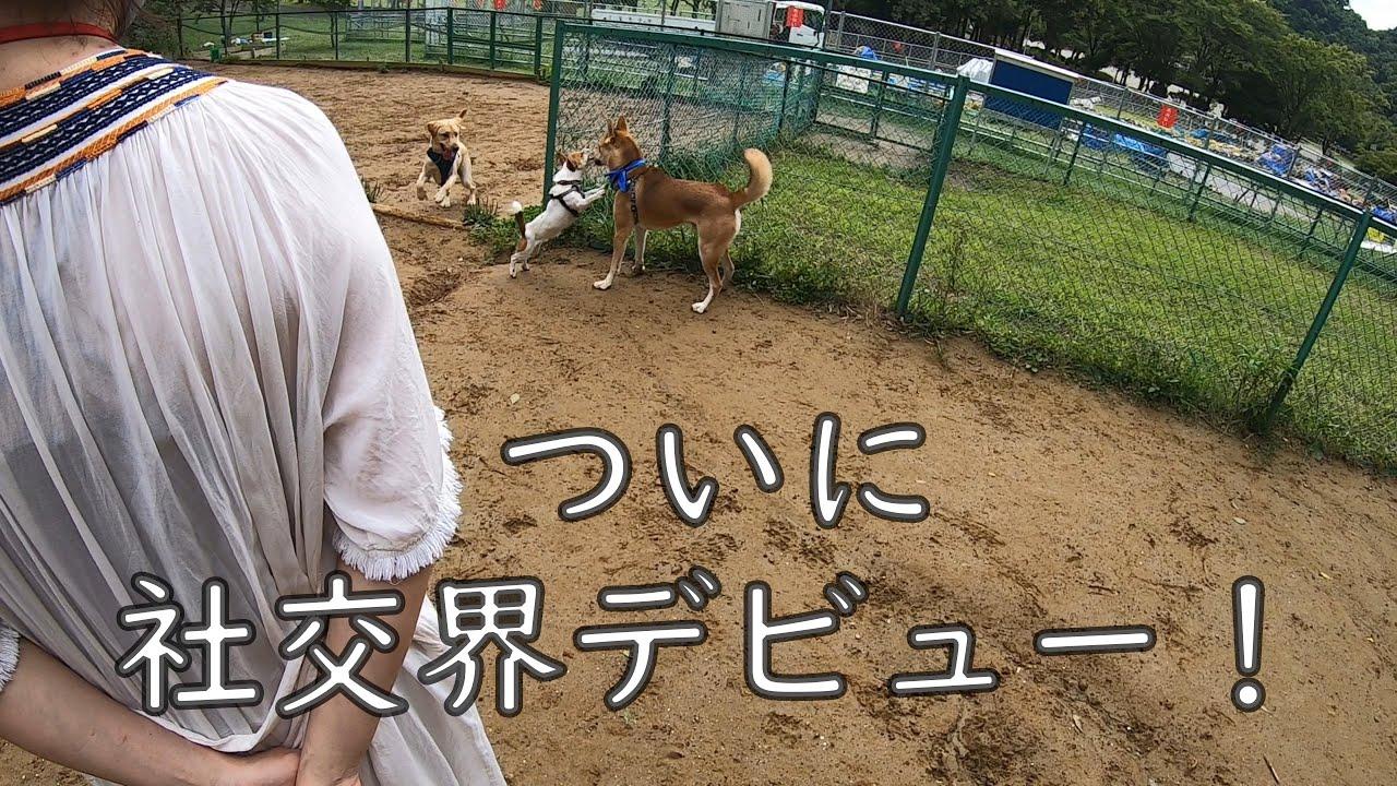 元保護犬ワンジロー、ついにドッグランで他の犬と遊ぶ!