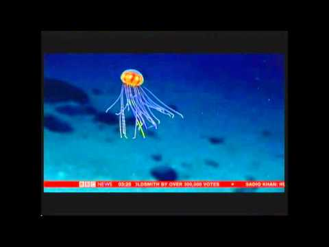 Mariana Trench pictures live (Pacific Ocean) - BBC News - 7th May 2016