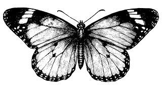 Der Butterfly-Effect (Chaos-Theorie)