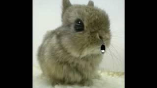 Bunny - James Blunt