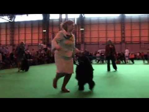 DFS Crufts 2010 Best of Breed Portuguese Water Dog