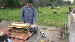 ADORMECER ABEJAS تنويم النحل في 10 دقائق