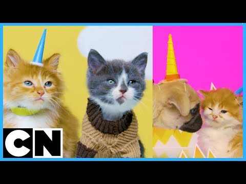 Cute Cat-toon Bloopers 🐱  | Unikitty & The Amazing World of Gumball | Cartoon Network