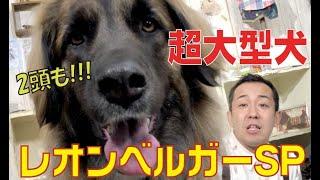 番組提供:ペットライン株式会社 http://www.petline.co.jp/ 超大型犬!...
