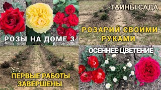 Розы на доме 3. Осеннее цветение. Розарий своими руками. Первый этап завершен.Обзор роз с названиями