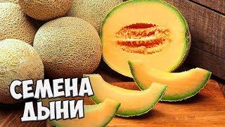 видео Лучшие сорта капусты для средней полосы России