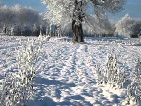 Розы и зима 2011-2012-2