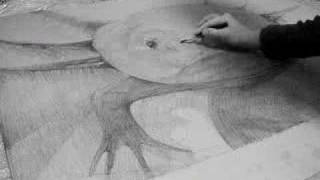 The axolotl is drawn by the lithograph(4)