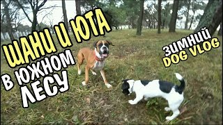Good Dog  Собаки Шани и Юта в южном лесу. Зимний dogvlog