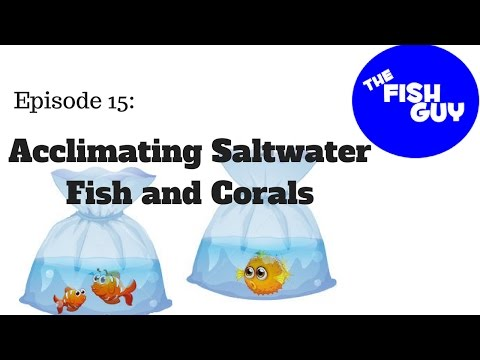 Ep. 15 - Acclimating Saltwater Fish And Corals