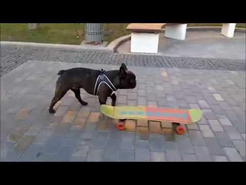 Говорящая собака катается на скейте