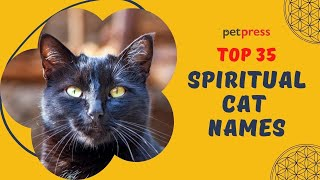 TOP 35 Spiritual Cat Names   PetPress