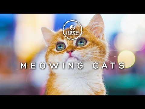CAT SOUNDS, CAT MEOWING, CAT NOISES TO ATTRACT CATS, ANNOY CATS, OR TO MAKE THEM HAPPY 8 HOURS MEOW