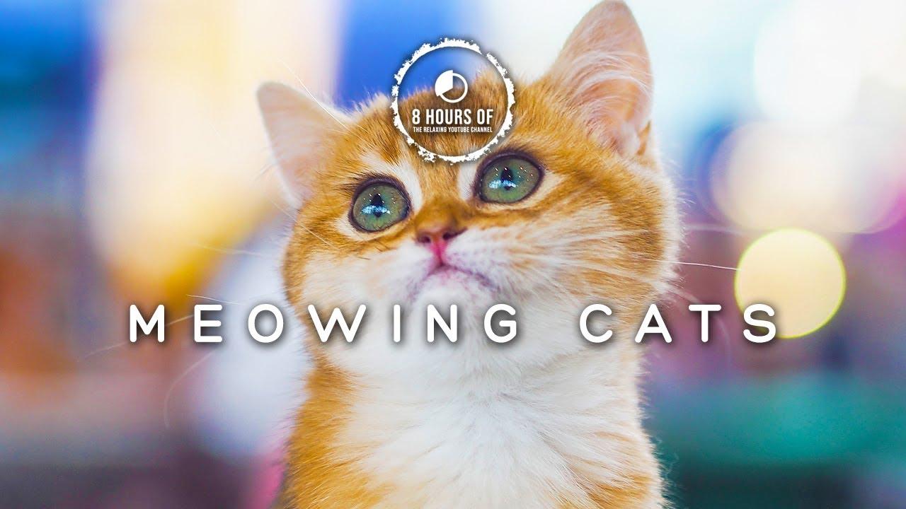 Grumpy Cat Meme I Love Math Grumpy Cat