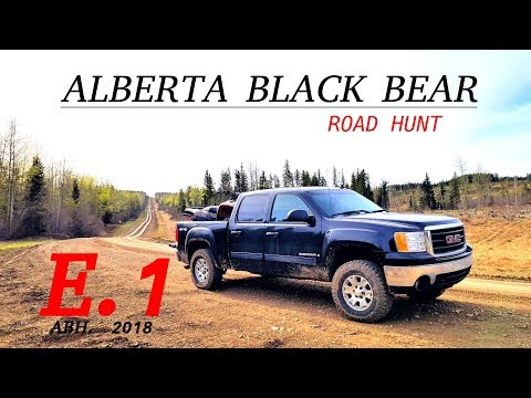 ALBERTA BLACK BEAR HUNT