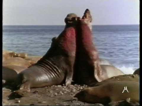 il ritorno degli elefanti marini mpeg 4