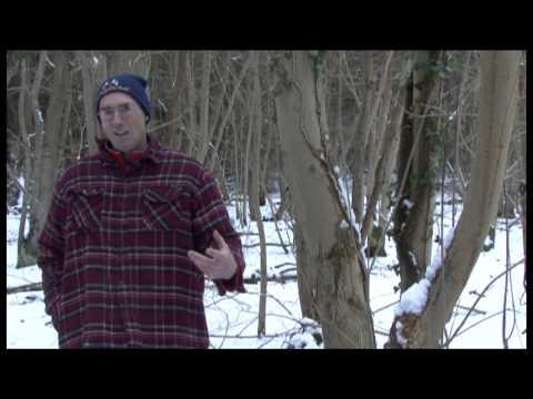 Ash Dieback: A species under threat