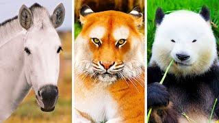 Сможете ли вы узнать этих животных без их знаменитых узоров?