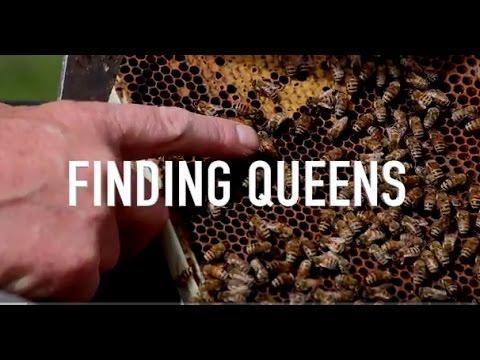 Finding Queens