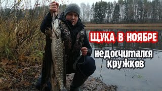 ЩУКИ АТАКОВАЛИ КРУЖКИ На Истринском водохранилище с ночёвкой Рыбалка 14 ноября 2020 г