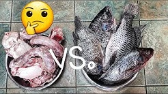 Which RAW Food Do My Dogs Like Best? TURKEY vs. FISH